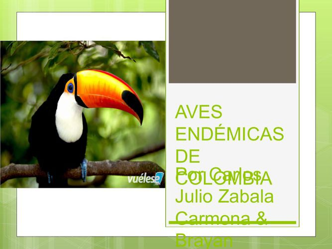 AVES ENDÉMICAS DE COLOMBIA