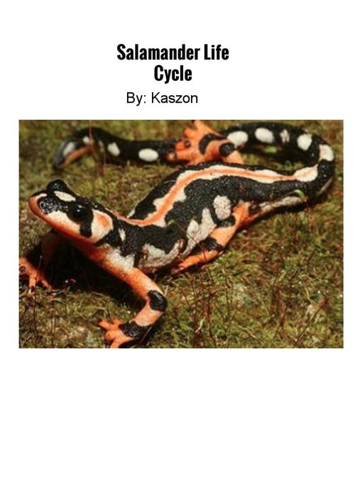 Salamander Life cycle