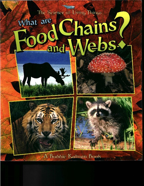 Web and Food Chains