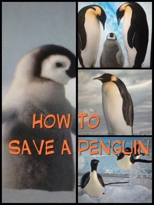 How To Save A Penguin