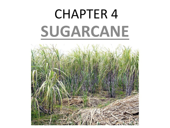 CHAPTER 4: Topic 1 & 2 (Sugarcane & Maize)