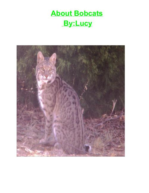 Lucy's Bobcat book