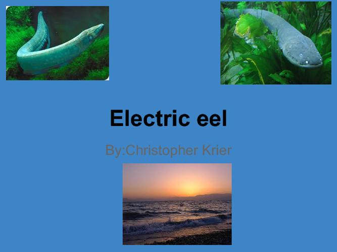 Eletric Eel