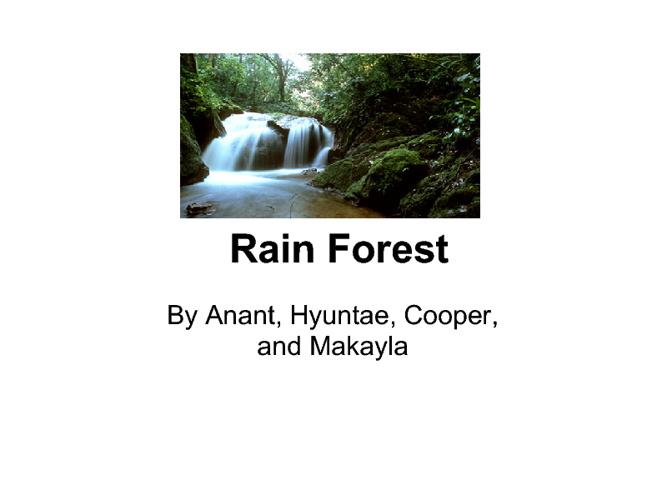 Rain Forest-4B