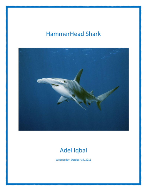 Copy of HammerHead sharks