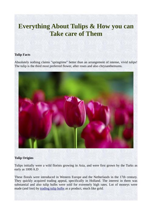 Everything About Tulips & How you can Take care of Them