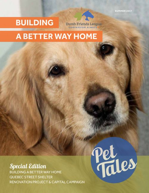 2017 Summer Pet Tales