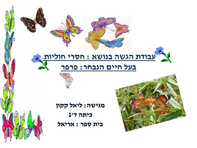 Copy of New Flip 1   מצגת על פרפרים