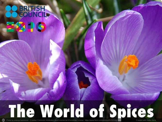 The World of Spices