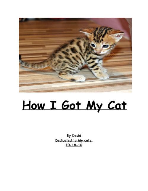 How I Got My Cat