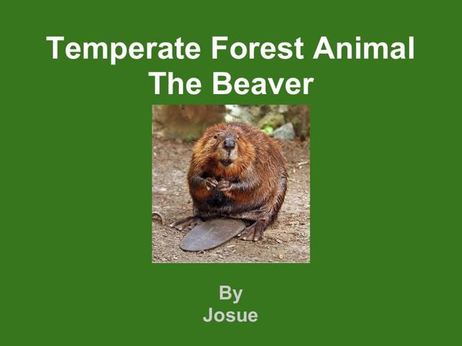 Josue beaver