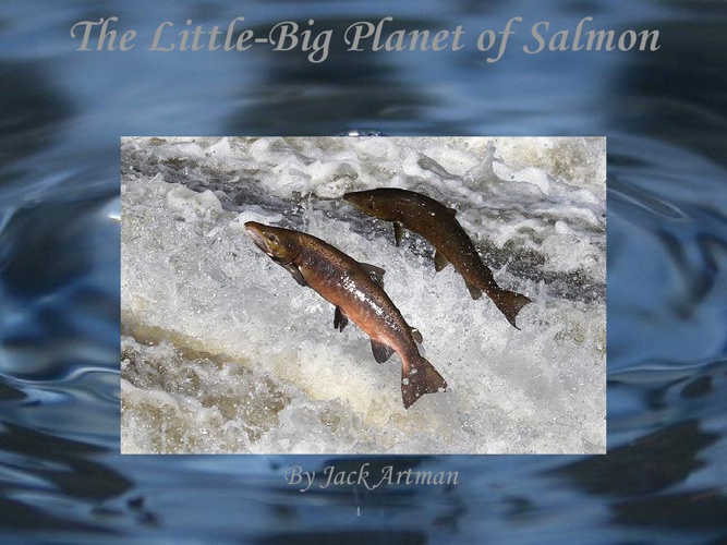The Little-Big Planet of Salmon