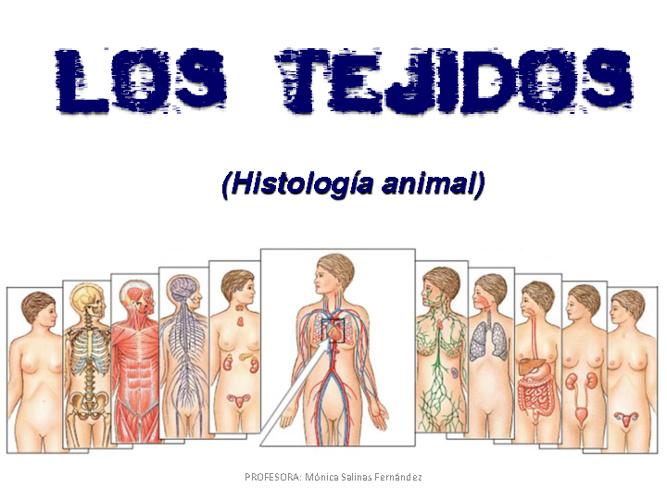 presentación: tejidos