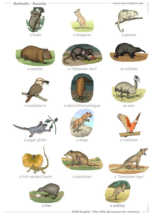animals_aussie