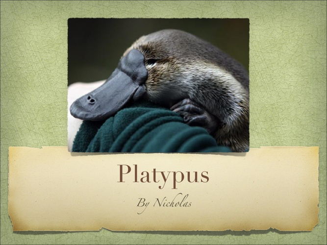 All About Platypuses