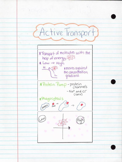 Unt 2 Cellular Transport Flipbook
