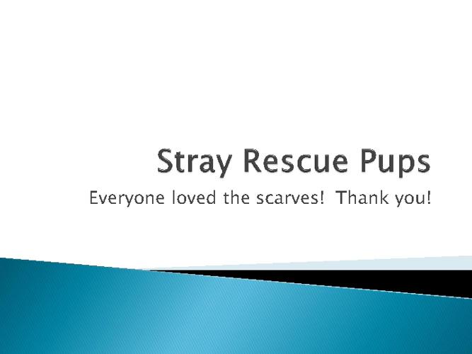Stray Rescue February 2011