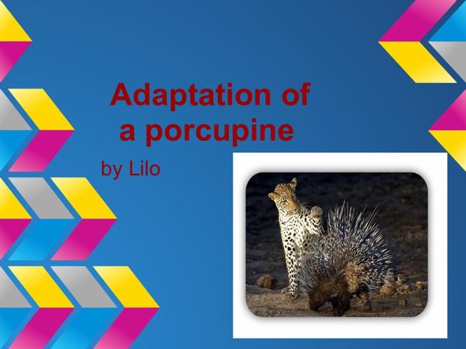 adaptation of a porkypin