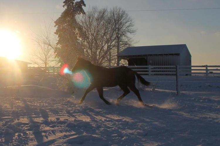 shari's horses