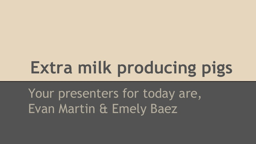 Transgenetic Animal - Extra Milk Producing Pigs