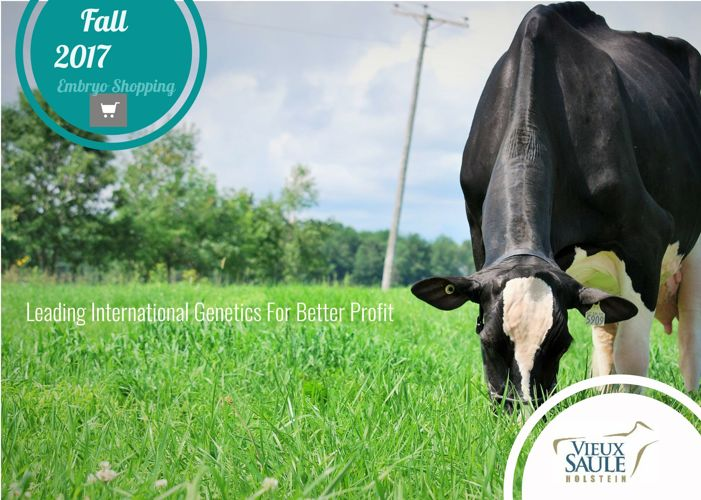 Vieux Saule Holstein International Embryo Catalogue