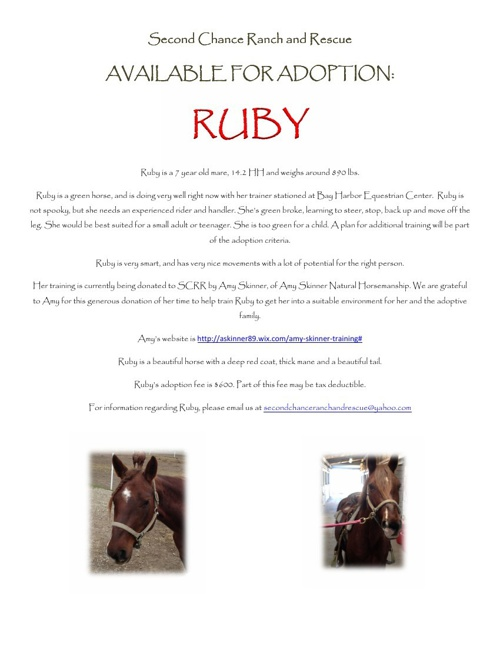 Ruby-Adoption Flyer January 2014