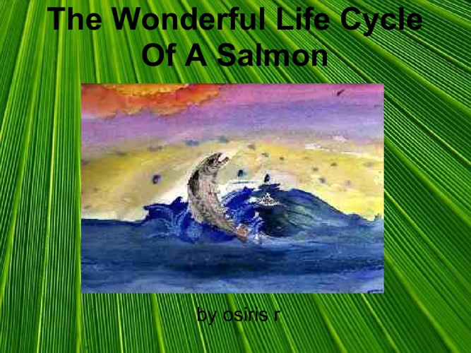 The Wonderful Life Cycle Of a Salmon