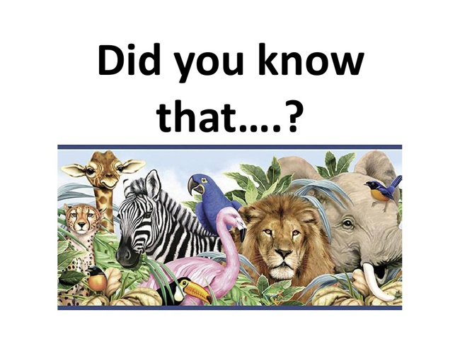 Animals Facts- Did you know that....?