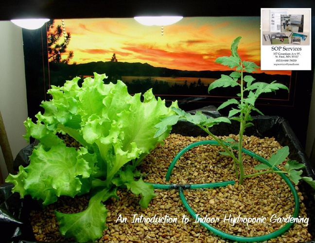 An Introduction to Indoor Hydroponics Gardening