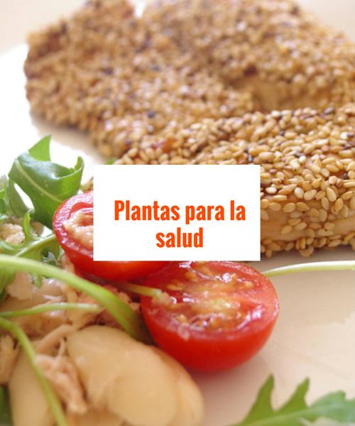 100 plantas curativas