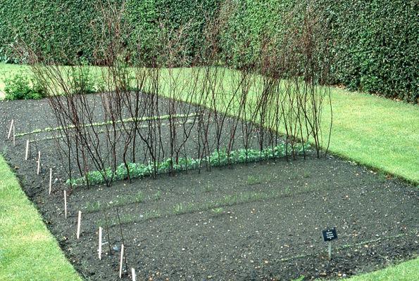 English Vegetable Gardens 1980