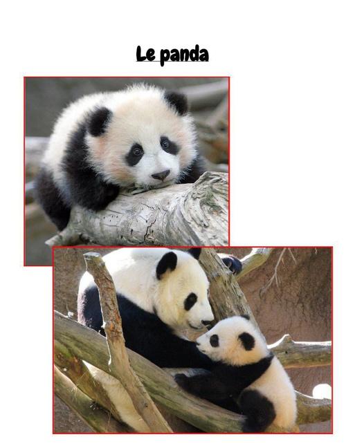 PandaFrenchBook