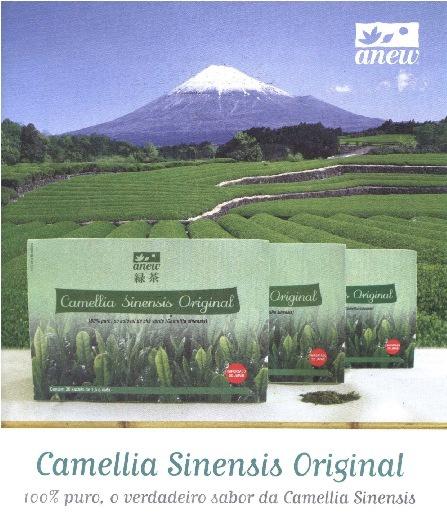 Camelia Sinensis Original