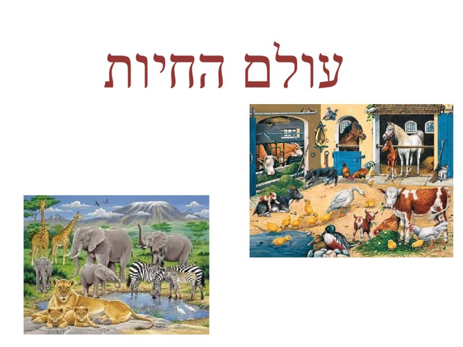 Copy of עולם החיות