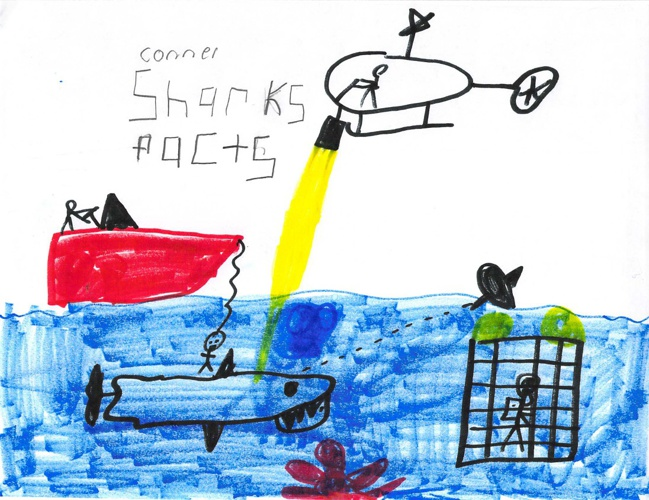 Shark Facts by Conner