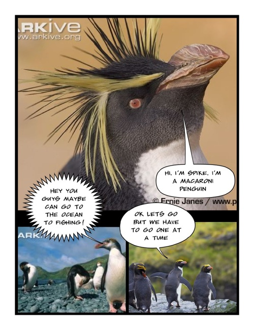 Spike the Macaroni Penguin by Sadia