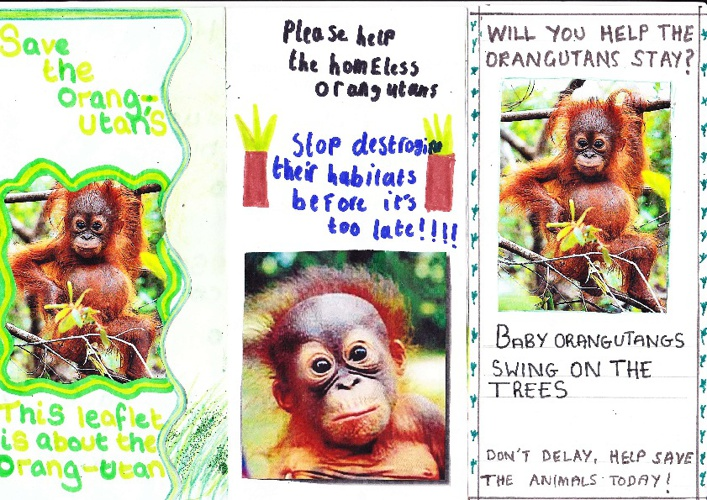 Orangutan Work Year 6