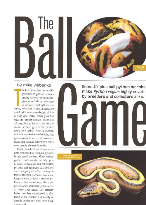 Ball Python Article