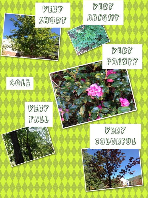 Mrs. Walden's Nature Walk  with Adjectives