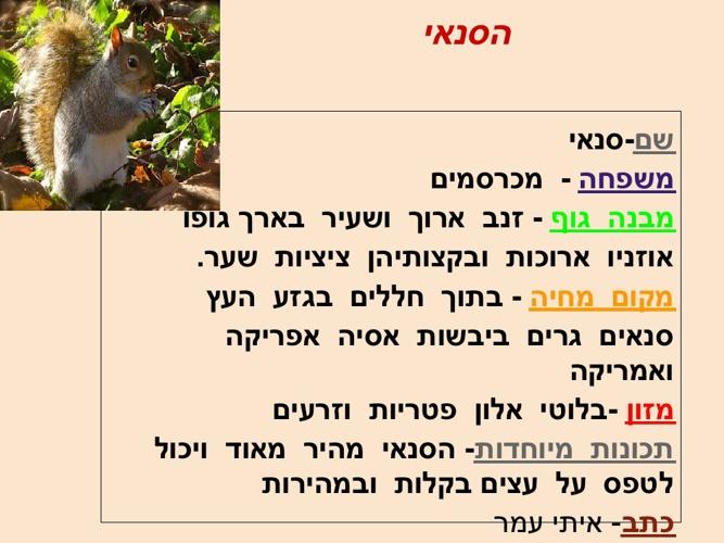 ספר דיגיטלי בעלי חיים
