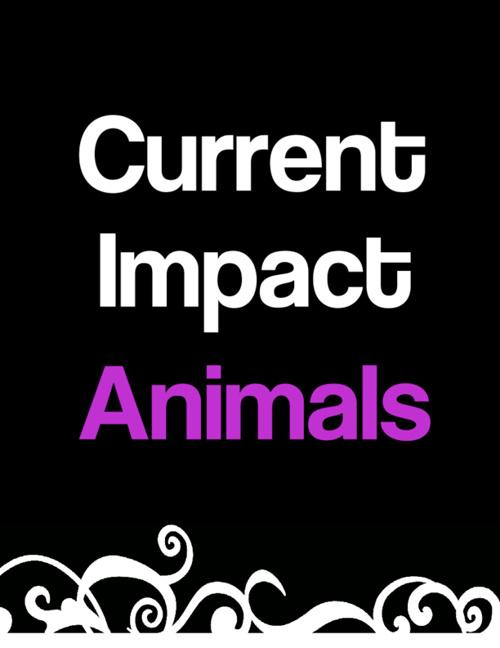Impact Animals Folder