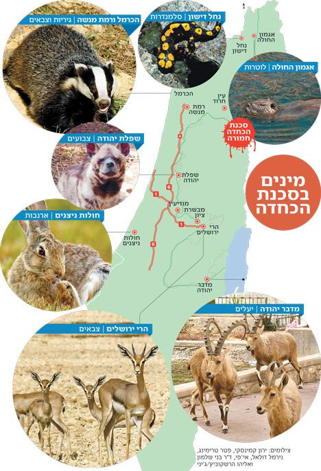 בעלי חיים בסכנת הכחדה