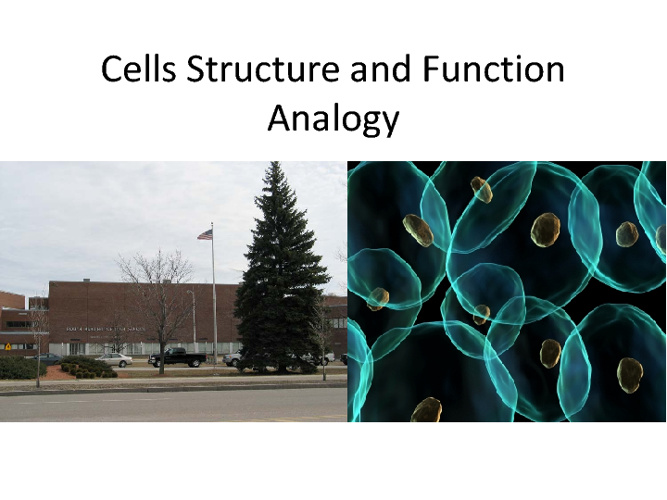 Cells analogy