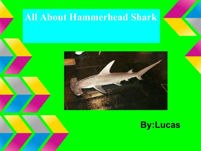 hammerheadshark-1