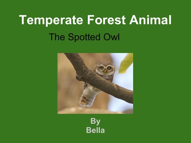 bella spottedowl