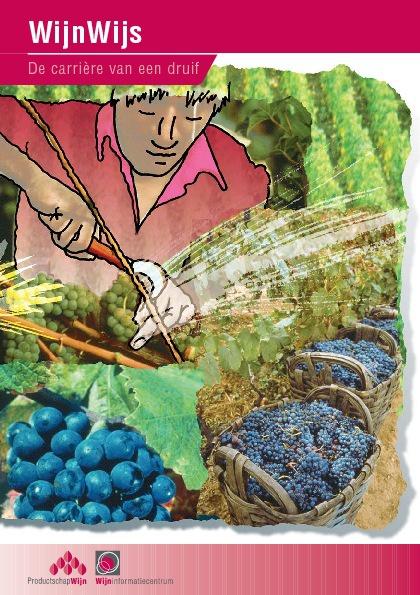 WijnWijs | De carrière van een druif. DUYNSTEEPOLAK communica