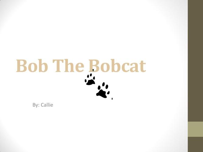 Callie's bobcat