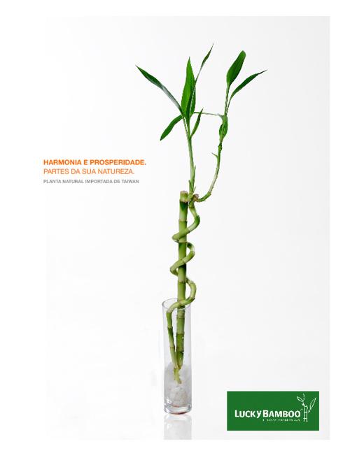 Catálogo Lucky Bamboo