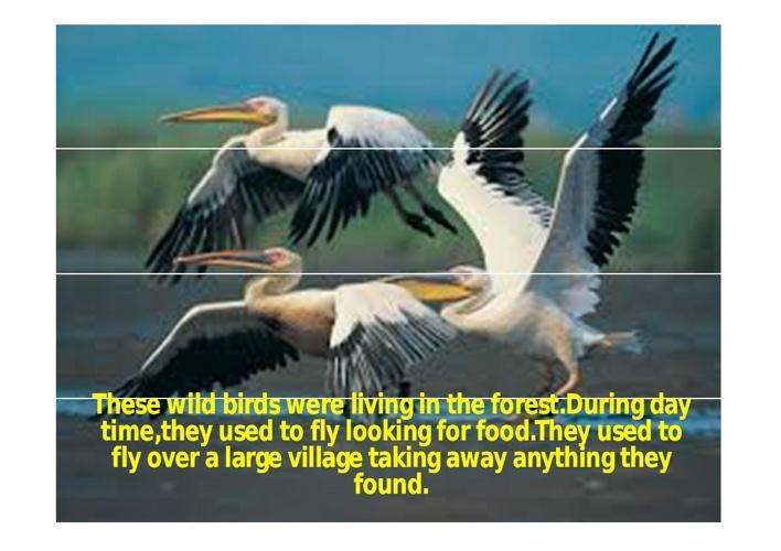 A MONSTER BIRD