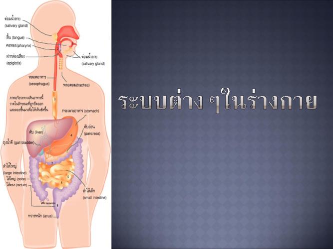 ระบบต่างๆในร่างกาย